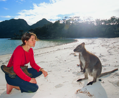 MB_Freycinet_-_Bennets_Wallaby
