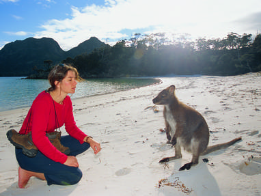 Mb freycinet   bennets wallaby