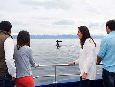 C   whale watch kaikoura