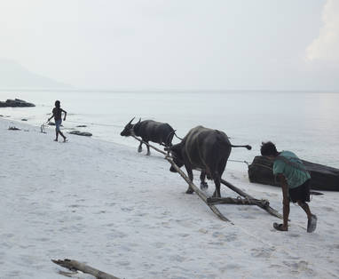 Song_Saa_children_with_buffalos_on_Koh_Rong_beach_8780