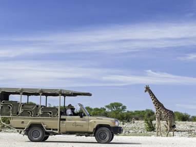 Game drives at onguma 1251